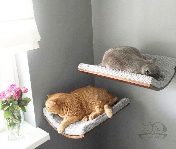 2499339086ba91fa3f00dd137c85dfa8--cat-perch-grey-cats