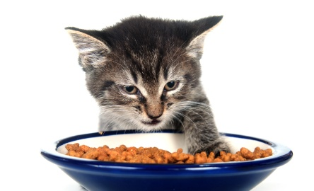 kitten-with-food-bowl_0