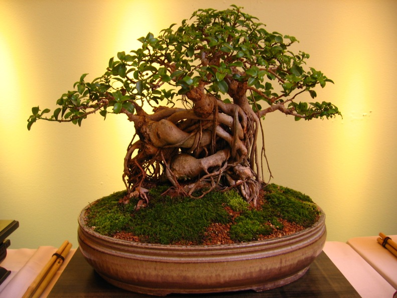10-things-avoid-for-bonsai-tree.jpg